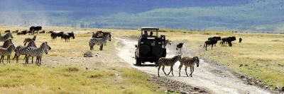 The Safari Tour Experience from Kruger National Park